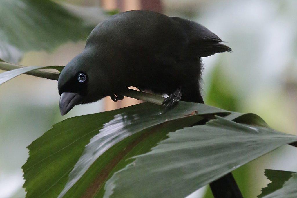 HongKong birds