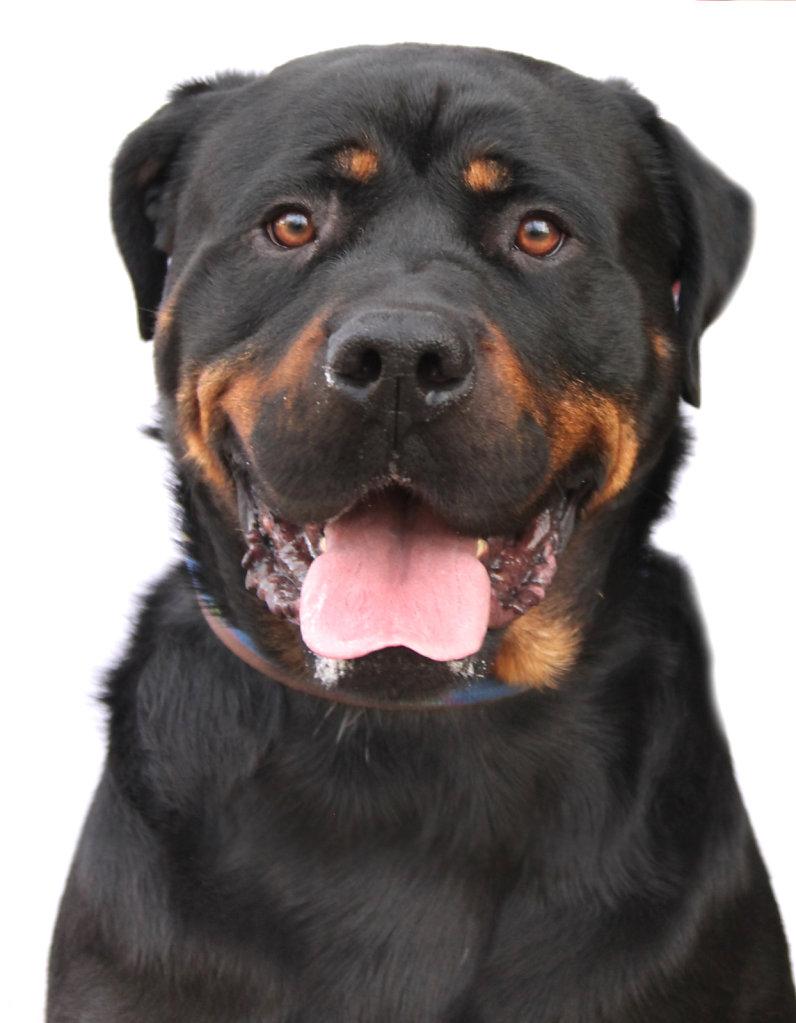 Dog7-copie.jpg